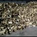 1 skrm ovntørret brænde (div. træsorter) AFHENTET